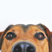 las terapias con perros en grupo reifs para combatir la soledad