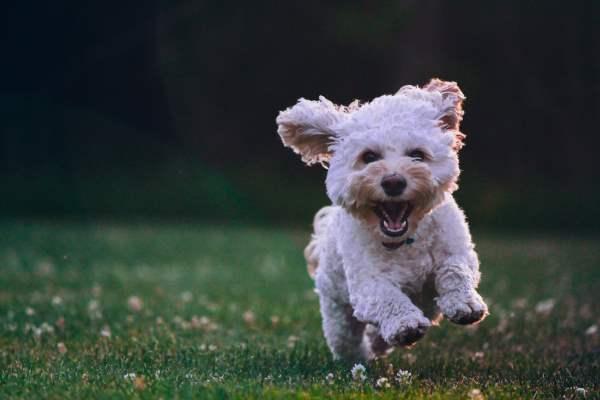 grupo reifs apuesta por la terapia con perros para disminuir la soledad